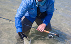 Relâche d'un bonefish