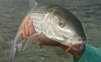 Les gros bonefish de Nouvelle Calédonie…